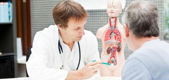 fonction de la prostate dans le corps humain